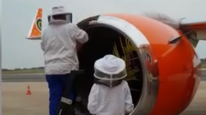 Bees in South African plane's engine delay flights