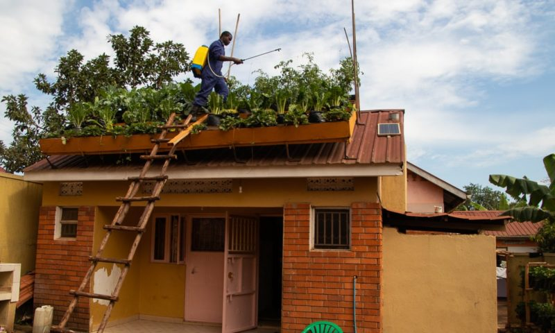 Rooftop farming: why vertical gardening is blooming in Kampala