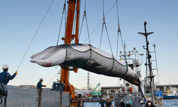 Japan launches bid to end ban on commercial whaling