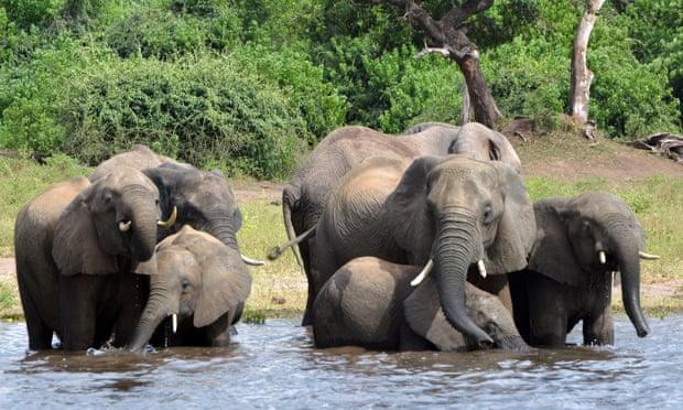 Botswana rejects claims of elephant poaching surge