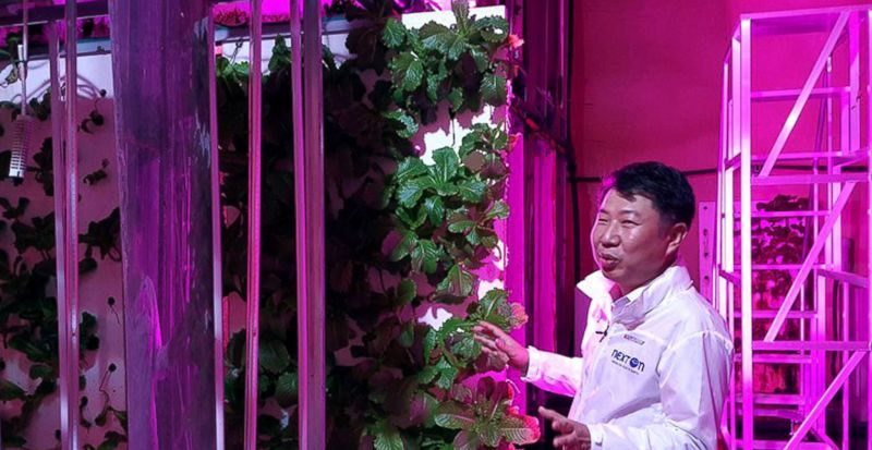 As temperatures rise, farmers plant crops in tunnel