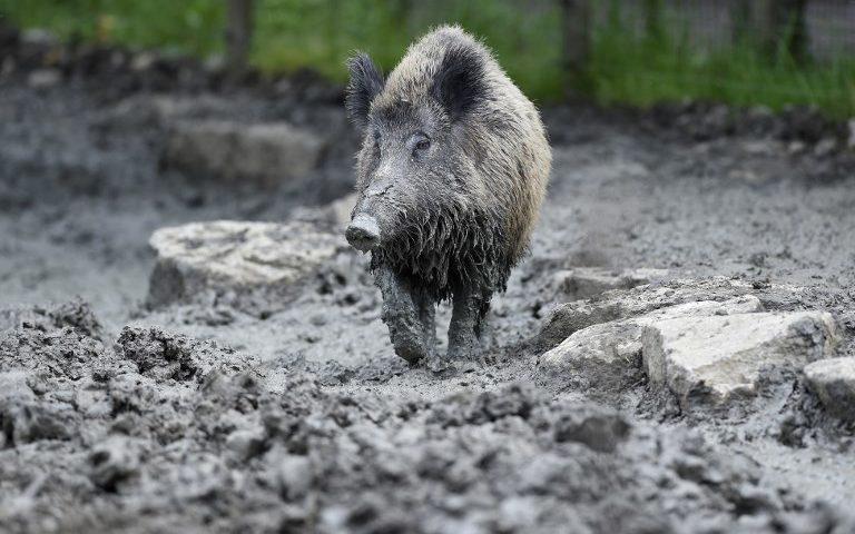French government steps in to help farmers fight rampaging animals