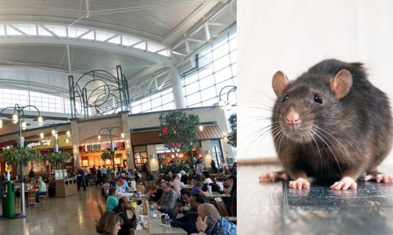 This US airport is battling a rat infestation