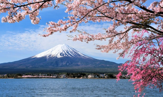 Typhoons 'trick' Japan's cherry trees into blooming months early