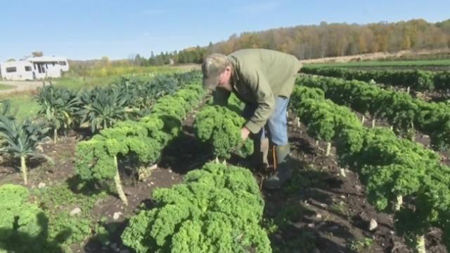 Veggie prices headed up?