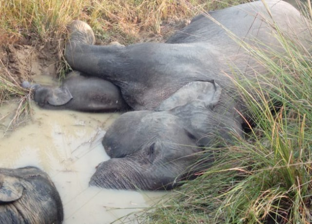 Elephants electrocuted