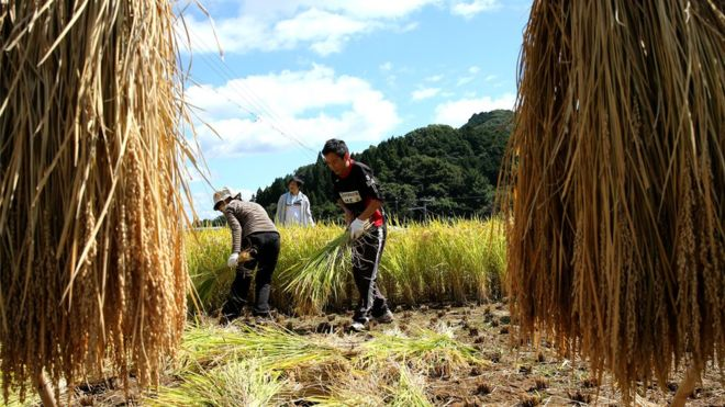Japan may loosen immigration rules for blue-collar workers