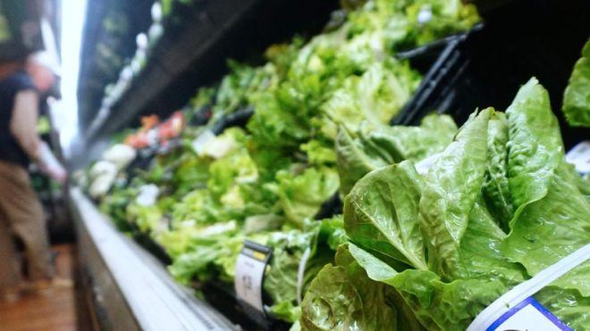 E. coli outbreak: Romaine lettuce probed in US and Canada