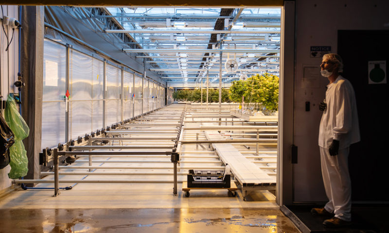 CannTrust makes its case as a major Canadian weed producer