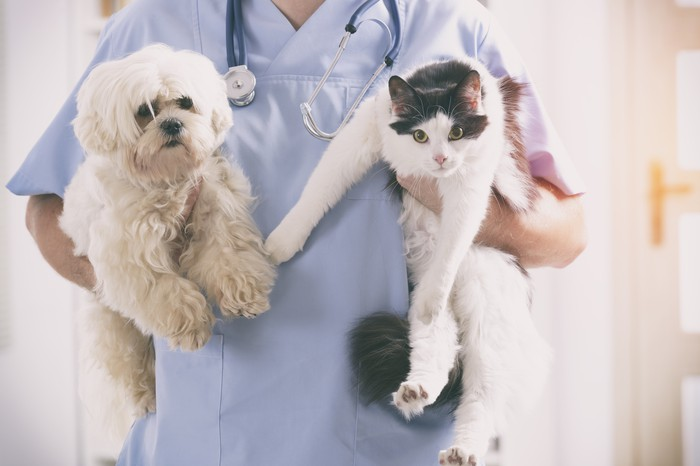 PetMed Express Inc. (PETS) Plunges 6.46% on January 10
