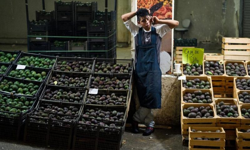 Mexican Avocado Growers Expect US Consumers to Bear Tariffs