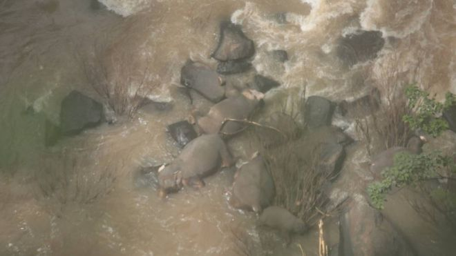 Six elephants die trying to save each other at Thai waterfall