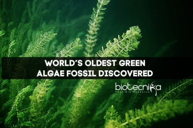 World's Oldest Green Algae Fossil Discovered in China