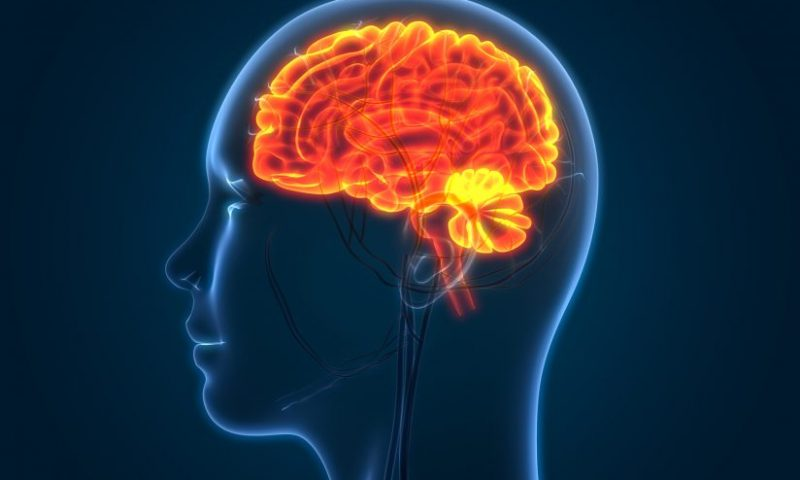 Research could provide more effective way to treat brain swelling after stroke