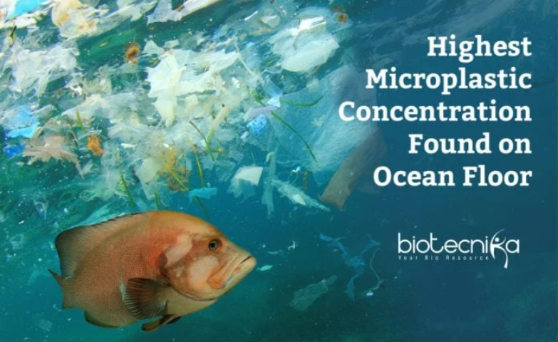 Highest Microplastic Concentration Found Deep Down On Ocean Floor