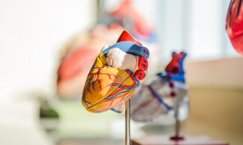 Medtronic's Melody, Harmony transcatheter pulmonary valves show gains in congenital heart disease