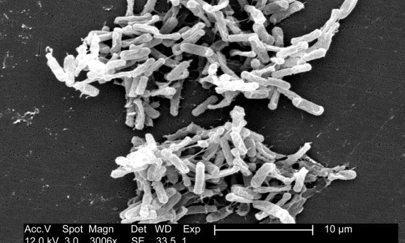 Finch Therapeutics' microbiome med quells stubborn C. difficile