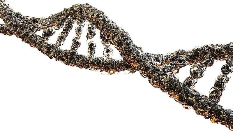 Dyne Therapeutics grabs $115M to ramp up muscle disease pipeline