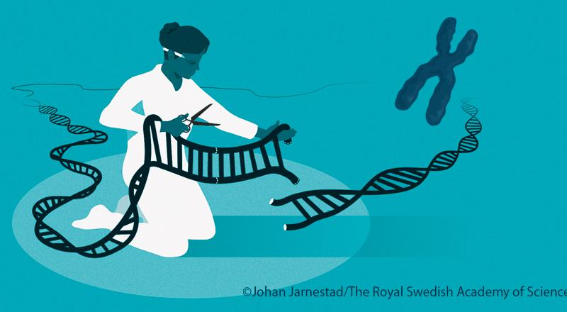 Nobel Prize in chemistry goes to CRISPR pioneers Doudna, Charpentier