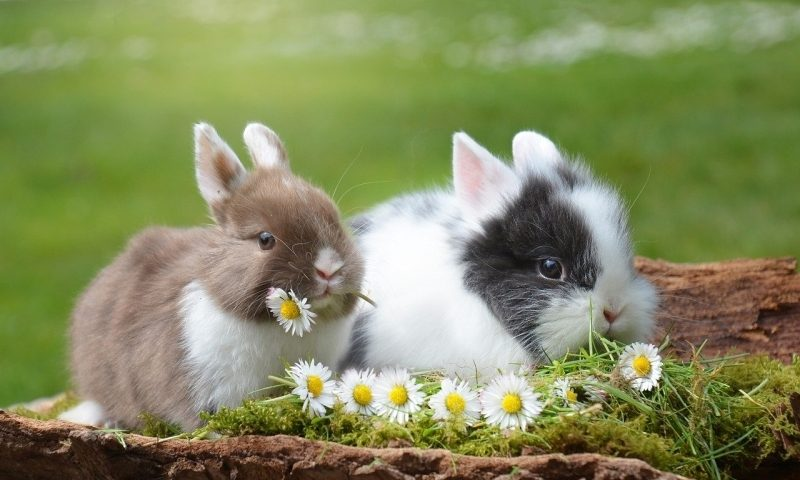 Arming the rabbit pox virus to fight cancer