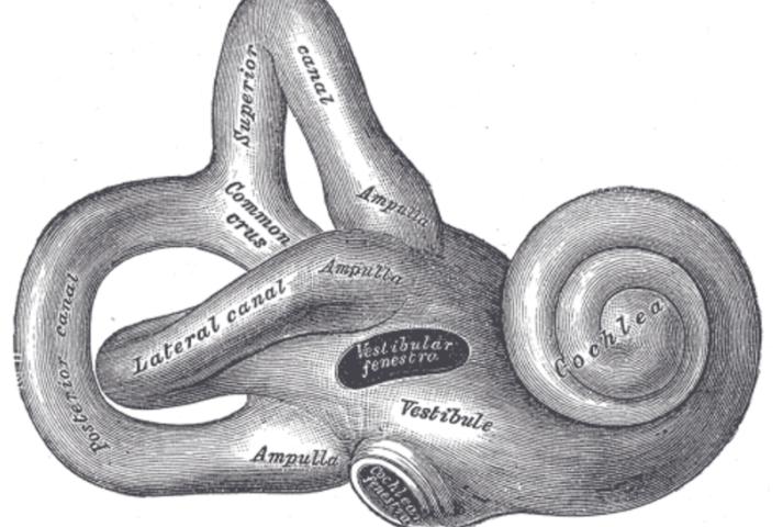 Otonomy fails phase 3, adding another twist to ear disease saga