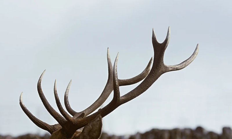 Caribou nets $115M to boost CRISPR tech, advance off-the-shelf cell therapies