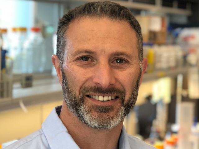 Merck taps tumor-microdosing Presage Biosciences for phase 0 trials