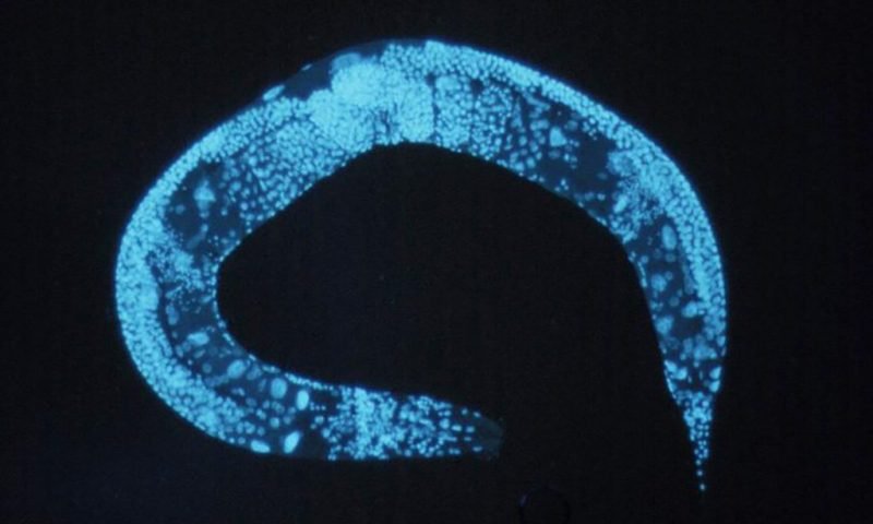 How roundworms could inspire new treatments for obesity and other food-related diseases