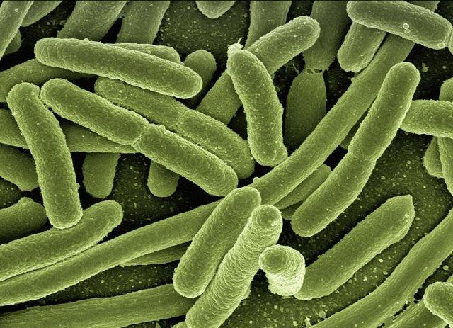 Viome scores FDA breakthrough label for cancer-screening, microbiome-sequencing AI platform